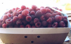 Come Pick Raspberries at Erwin Orchards in South Lyon, Michigan