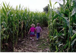 Don't get lost in the corn maze